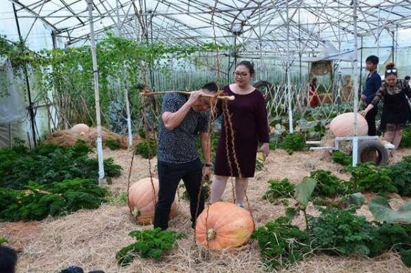 Ngỡ ngàng với vườn bí khổng lồ ở Đà Lạt