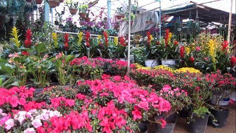 Thành phố Vinh, Nghệ An sẽ có đường hoa đẹp, quy mô vào dịp Tết Nguyên Đán 2020