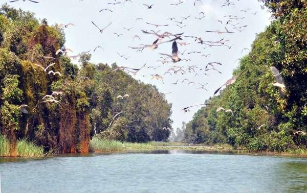Tìm về thiên đường xanh ở khu bảo tồn Láng Sen