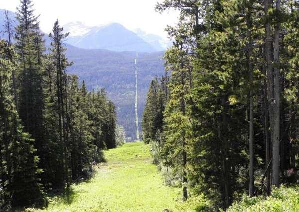 Biên giới Mỹ - Canada, nơi cây không thể mọc