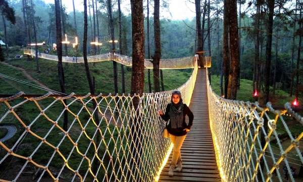 Cây cầu phát sáng giữa rừng