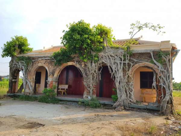 Ngôi đình 100 tuổi 'độc nhất vô nhị' ở miền Tây có 2 cây bồ đề mọc trên mái