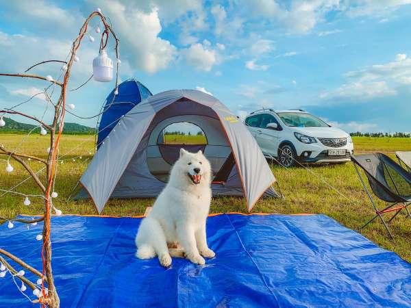 Chú chó du lịch khắp các bãi biển miền Nam
