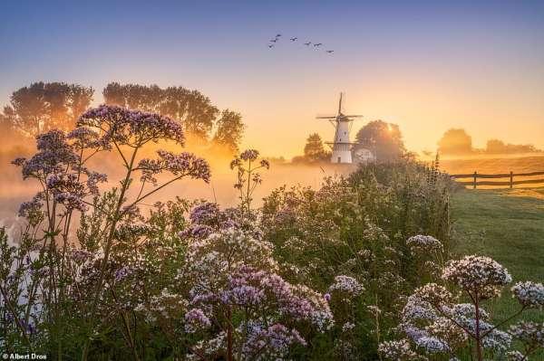Vẻ đẹp thần tiên của mùa xuân Hà Lan