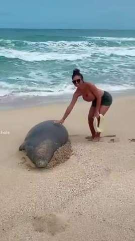 Chạm vào hải cẩu ở đảo Hawaii bị coi là 'trọng tội